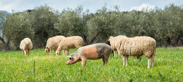 Should I Buy Organic, Grass-Fed, and Pastured Animal Products?