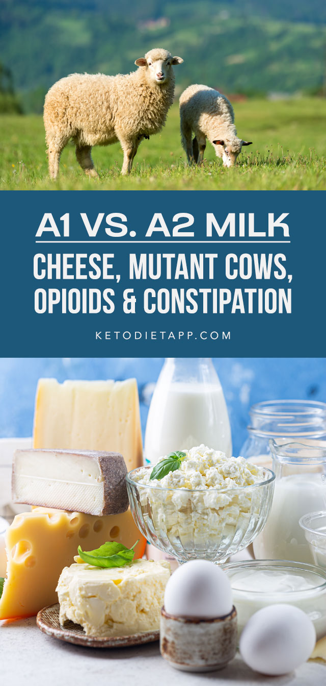 A1 vs. A2 Milk: Cheese, Mutant Cows, Opioids & Constipation