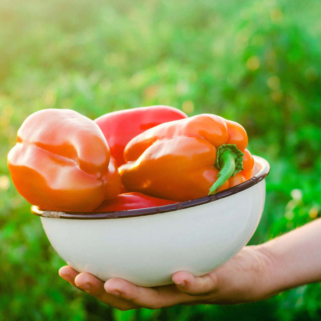 Should I Buy Organic Fruits and Vegetables? Your Ultimate Guide